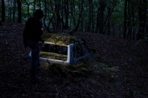 dark night woods forest car
