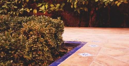 Alcázar of Seville walkway path stones shrubs