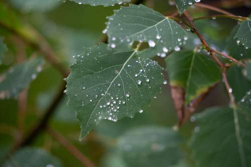 leaves rain droplets wet nature
