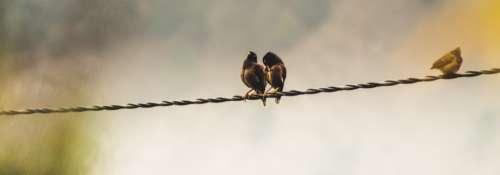 birds wire widescreen wallapaper fly
