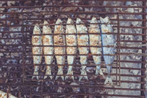 grilled fish food
