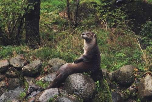 nature landscape wildlife animal woods