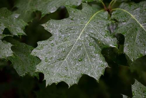 wet leaves droplets water rain