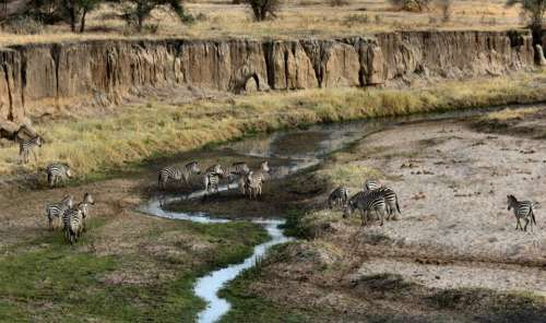 nature landscape wildlife animal zebra
