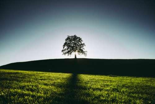 summer tree shadow field alone