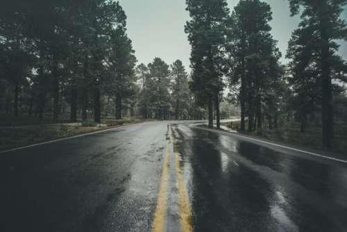 wet road rain trees plant