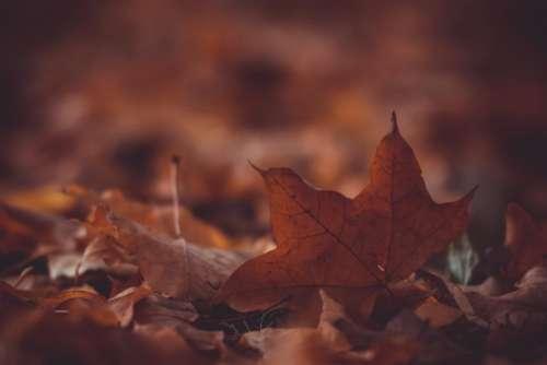 leaves fall autumn blur