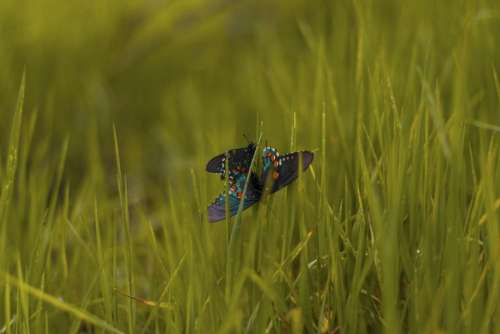 butterfly insect nature green grass