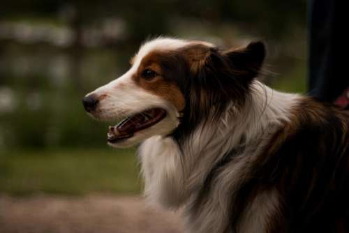 dog animal pet puppy