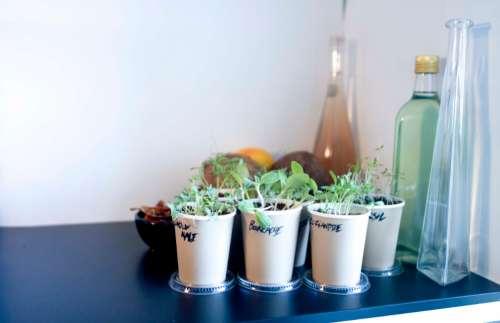 herbs pot plant growing nature