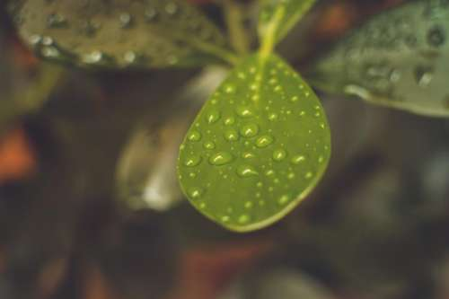 green plants leaves nature wet