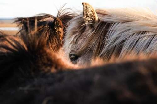 horse animal fur