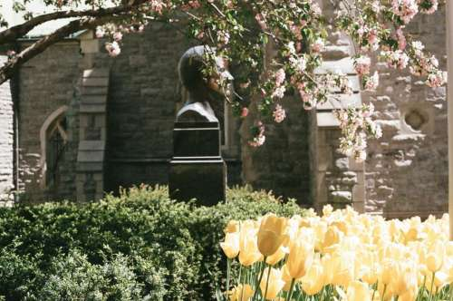 flowers garden yellow statue bronze