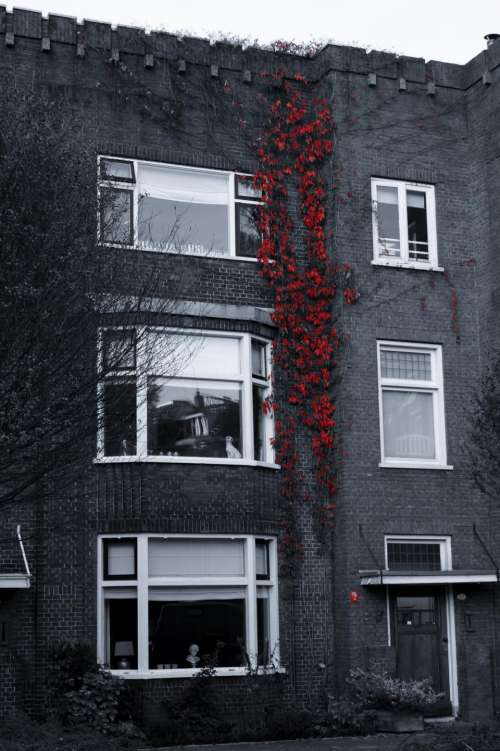 red vines bricks windows building