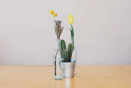 flowers vases cactus tulips decoration