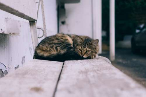 cat animal rest steel bench
