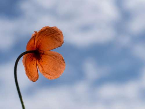 blue sky orange petal flower