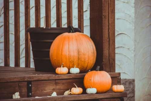 thanksgiving fall weather pumpkins pumpkin