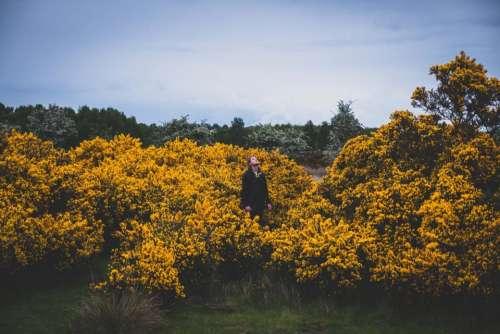 yellow flower plants outdoor farm