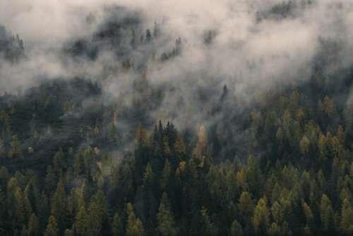 nature landscape woods forest aerial