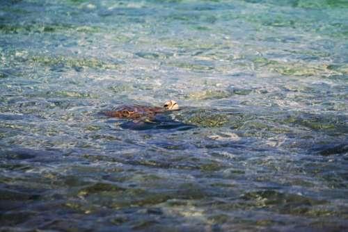 animals amphibians turtles tortoise swim