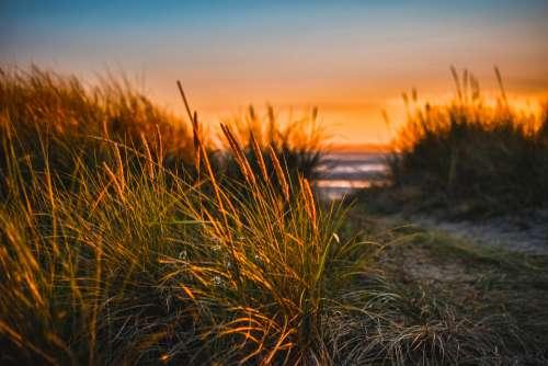 wildflower beach sunset grass sun