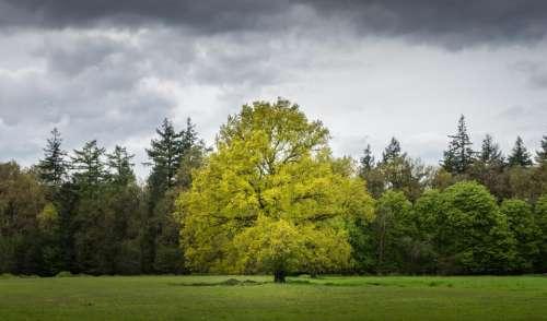 cloud sky tree plant nature