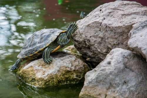 turtle shell animal rocks water