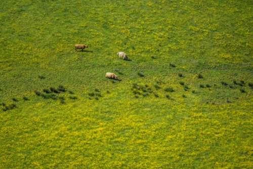 landscape highland nature green grass