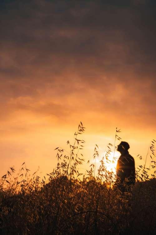 sunset silhouette clouds sky sun