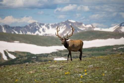 deer grass mountain snow blue sky