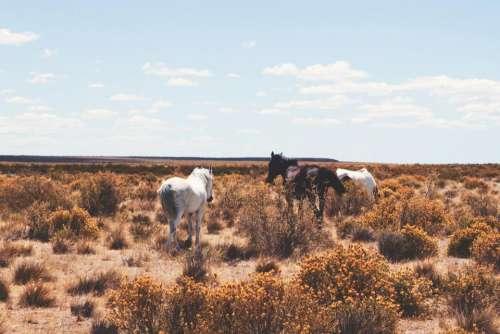 horses graze horse field grass