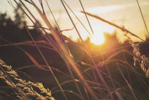 grass bokeh sunlight sunshine sunrise