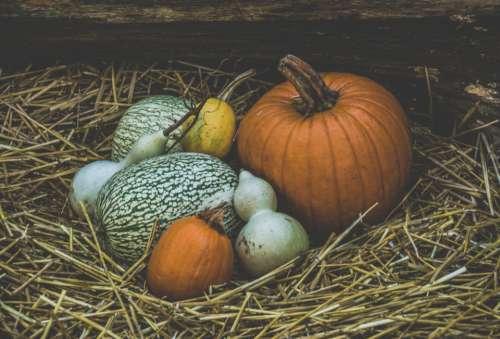 halloween halloween pumpkin orange orange color pumpkin