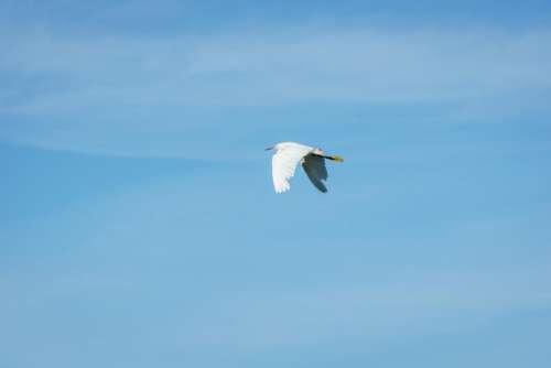crane bird flying wings blue