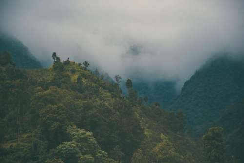mountain trees plant nature highland