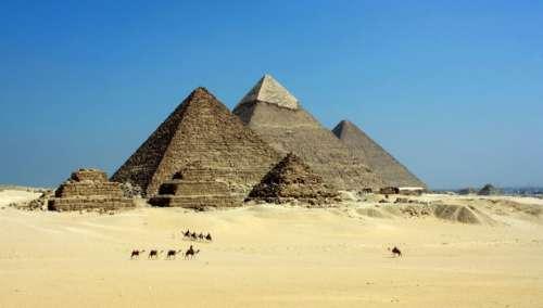 egypt desert animals camels sand