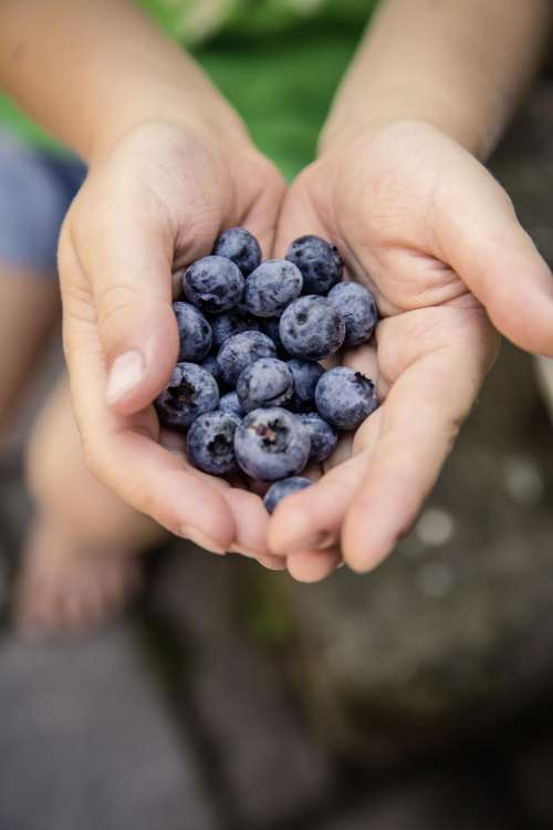 berry blueberry fruit food palm