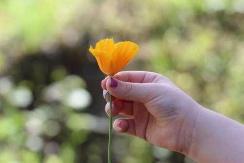 hand flower yellow petal plant