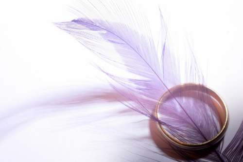 purple feather gold ring objects
