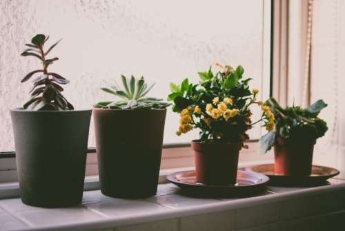 plants window sill garden house