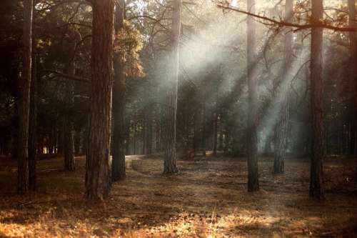 trees plant forest fog sunshine