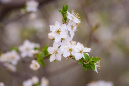 white petals flower bloom blossoms