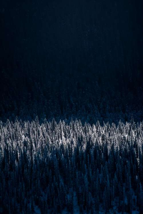 trees forest woods nature dark
