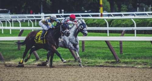 horse race game sport cowboy