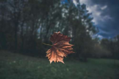 leaf fall tree plant nature