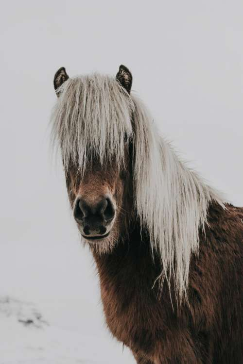 horse animal brown white snow