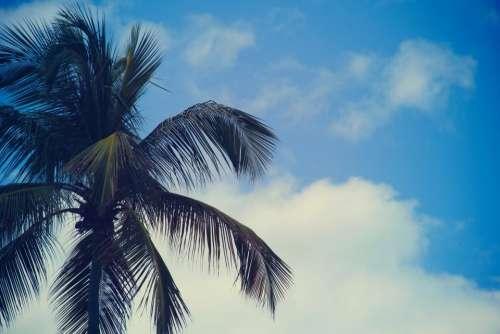 palm trees blue sky summer sunshine