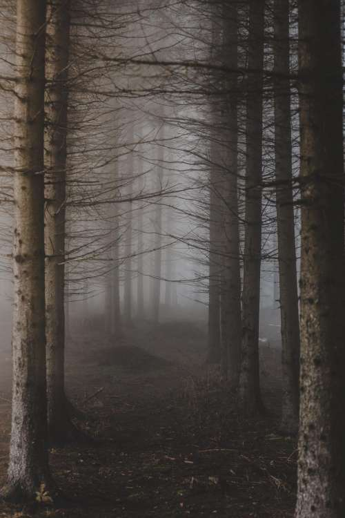 trees branches plant s nature foggy