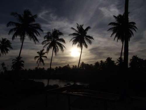 Sun beach palm trees tropical dusk